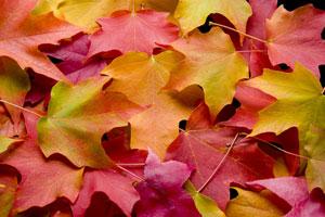 Was man von den Jahreszeiten über Veränderung lernen kann.